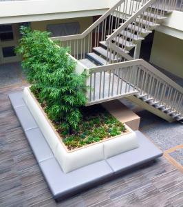 healing benefits through plants