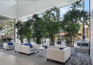 Living trees indoors brings in a feeling of wellness to the indoors.